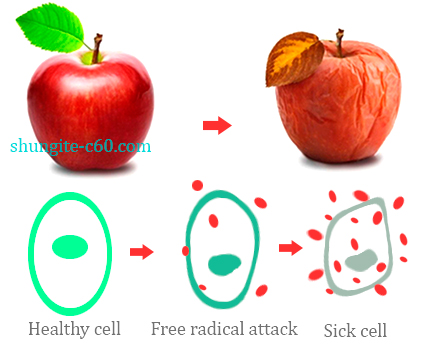 free radical cell attack