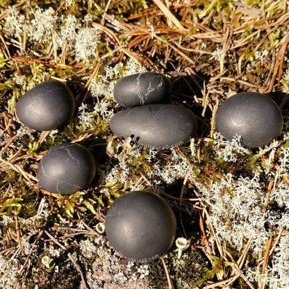 100 gr shungite pebble